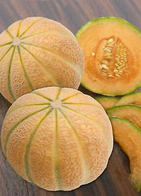 Vegetable - Kings Seeds - Picture Packet - Melon - Malaga F1 - 20 Seeds