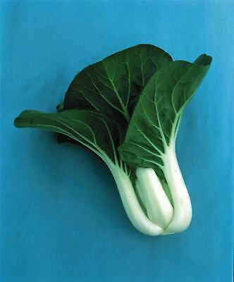 Vegetable - Kings Seeds - Picture Packet - Pak choi - Joi Choi F1 - 150 Seeds