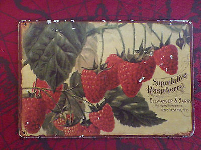 ellwanger & barry Mount Hope Nursaries Magnet Superlative Raspberry Vintage