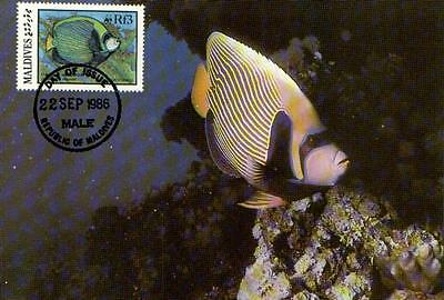 (70521) Maxicard - Maldives - Emperor Angelfish - 1986