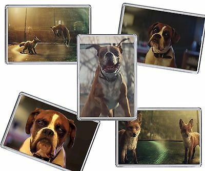 Buster the Boxer John Lewis xmas Advert Fridge Magnet Chose from 5 images