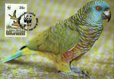 (70542) Maxicard - St Lucia - Parrot - 1987