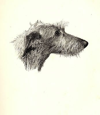 1935 Antique DEERHOUND Print Dog Gallery Wall Art Gift for Dog Lover CFW 1730