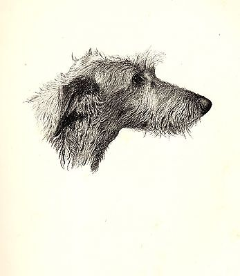 1935 DEERHOUND Print Dog Gallery Wall Art Gift for Dog Lover CFW 1730
