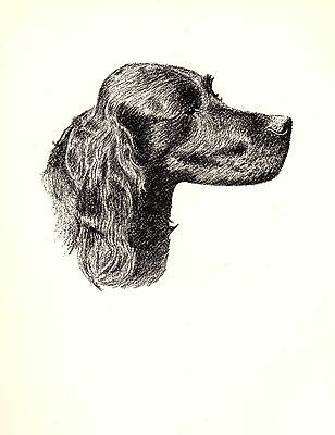 1935 Antique GORDON SETTER Print Gallery Wall Art Gift for Dog Lover CFW 1740