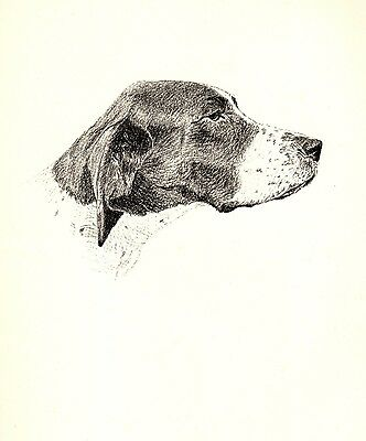 1935 Antique POINTER Dog Print Gallery Wall Art Gift for Dog Lover CFW 1742