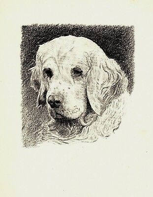 1935 CLUMBER SPANIEL Print Gallery Wall Art Gift for Dog Lover CFW 1747