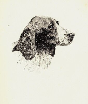1935 Antique WELSH SPRINGER SPANIEL Print Vintage Gift for Dog Lover CFW 1752