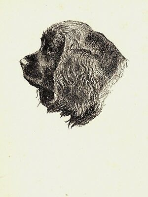 1935 Antique SUSSEX SPANIEL Print Gallery Wall Art Gift for Dog Lover CFW 1753