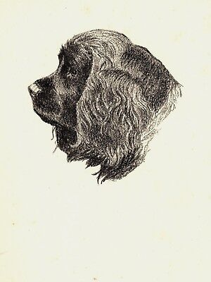 1935 SUSSEX SPANIEL Print Gallery Wall Art Gift for Dog Lover CFW 1753