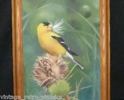 GOLDFINCH Gold Finch SONG BIRD Songbird THISTLE Signed NATURE Framed PAINTING