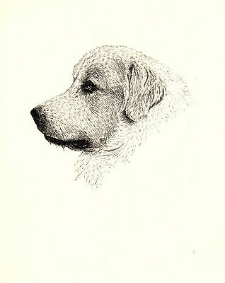 1935 GREAT PYRENEES Dog Print Gallery Wall Art Gift for Dog Lover CFW 1817
