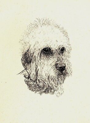 1935 Antique DANDIE DINMONT Terrier Print Gallery Wall Dog Lover Gift CFW 1831