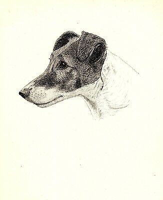 1935 Antique Smooth FOX TERRIER Print Gallery Wall Gift for Dog Lover CFW 1833