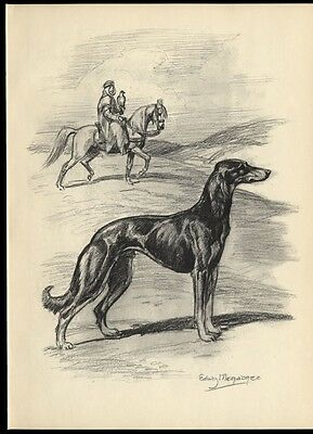 Saluki Dog: after Painting by Edwin Megargee: Authentic 1953 Book Illustration