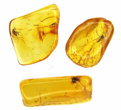 3 Amber Stones With Fossil Insects Inclusions - 45 Millions Years Old!!! (3670 )