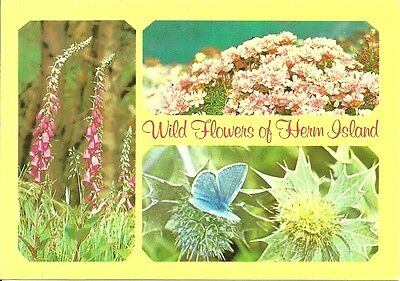 3 View Multi-View Of Wild Flowers Of Herm, Channel Islands.