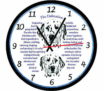 Dalmation Dog Origins & Facts Large  Gift Boxed Wall Clock