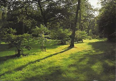 Westonbirt Arboretum - Summer evening in the Link - Posted Postcard