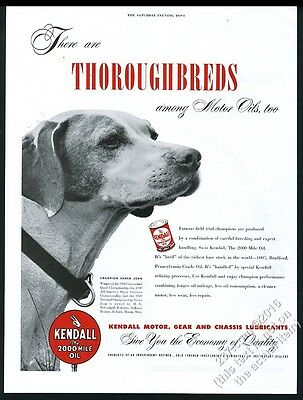 1950 champion Pointer dog photo Kendall Motor Oil vintage print ad