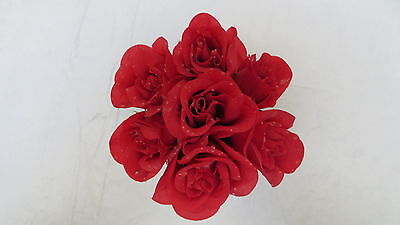7 Crafting Red Rose Buds with Dew