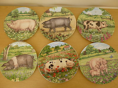 6 Royal Doulton Pigs in Bloom Plates by Debbie Cook