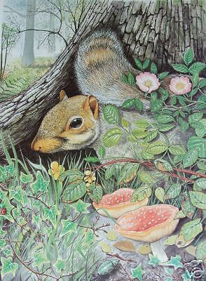 Squirrel. Wildlife Limited Edition Signed Print(47/300)   Free P&p