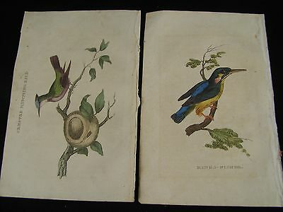 2 Antique Hand Colored Engraving Prints Kings-Fisher & Crested Humming-Bird