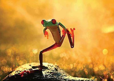 Sumo Frog Nature Poster Picture Wall Art Print A3 Amk2538