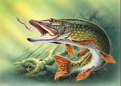 Pike Fishing Picture Poster Print Amk515