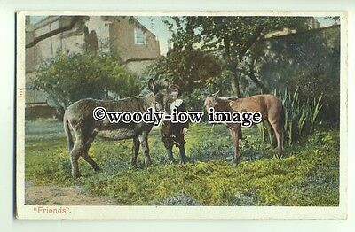 """an0715 - Donkeys - """"Friends"""" Young Lad with his Beloved Donkey & Horse- postcard"""