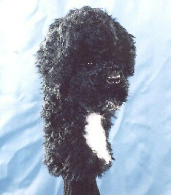 B&w Plush Portuguese Water Dog Golf Headcover