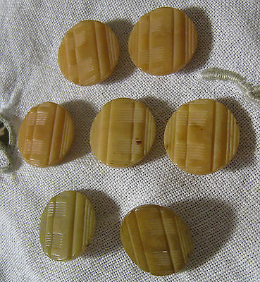 """7 Antique Vegetable Ivory Caramel  BUTTONS Old 1/2"""" Tagua Sewing Primitive lot1"""