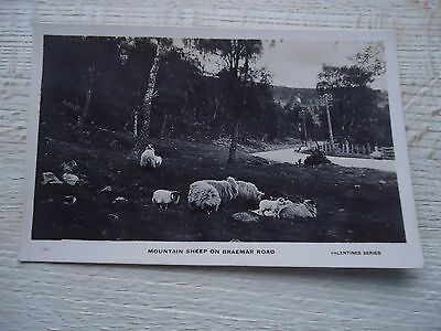 Old Postcard Mountain Sheep On Braemar Road 1920S / 30S ? Valentine
