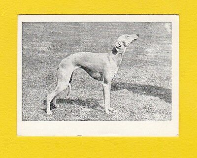 Dogs  -  Candy Novelty  -  Scarce  Dogs  Card  -  Whippet  -  1953