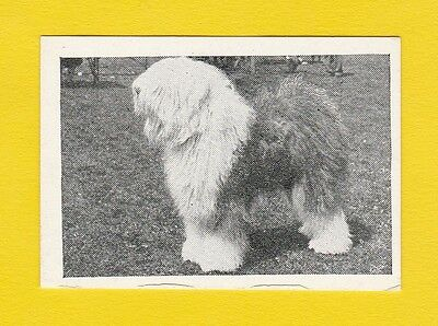 Dogs  -  Candy Novelty  -  Scarce  Dogs  Card  -  Old  English  Sheepdog -  1953