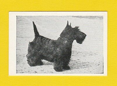 Dogs  -  Candy Novelty  -  Scarce  Dogs  Card  -  Scottish  Terrier  -  1953