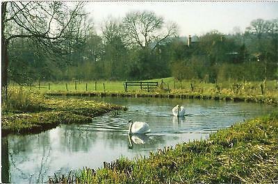 The Wylye River, Wiltshire - Unposted Postcard