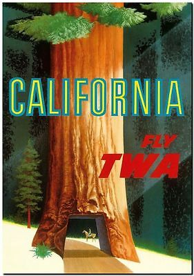 """Vintage Illustrated travel poster CANVAS PRINT California Giant trees 16""""x12"""""""