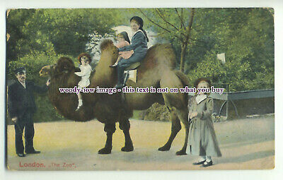 an0751 - Early View of Children enjoying a Camel Ride, at London Zoo - postcard
