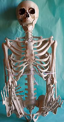 Pose-N-Stay Skeleton Halloween Yard Decor Prop 5FT