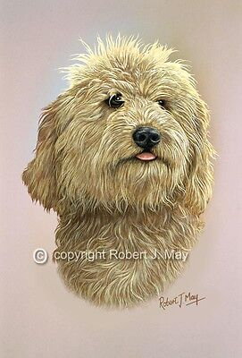 Labradoodle Head Study Print by Robert J. May