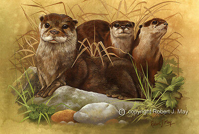 Signed Otter & young Print by Robert J. May