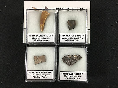 Fossil Collection - Spinosaurus, Triceratops Tooth, Oviraptor, Dinosaur Bone