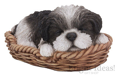 Vivid Arts - PET PALS PUPPY DOG IN BASKET & SHIH TZU BOX - Black White Shih Tzu
