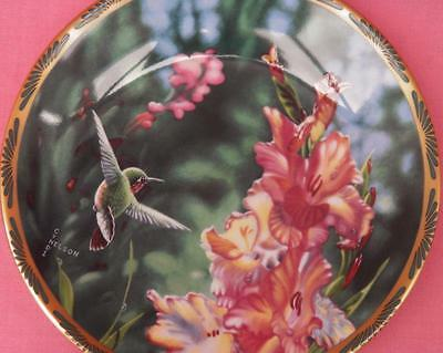 Calliope Hummingbird And Gladioli Plate Cyndi Nelson Pickard Gems Of Nature
