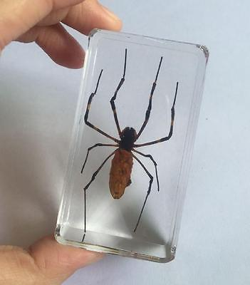 WHOLESALE REAL INSECTS HUGE SPIDER CLEAR paper-weight  cs0-1