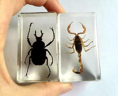 2pc fashion insect scorpion  black beetle mix paper-weight  cs0-3