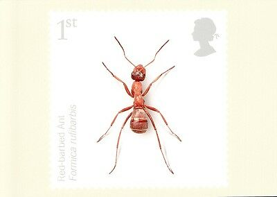 (11068) Postcard GB PHQ - Red-barbed Ant - 2008 mint