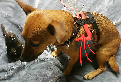 Dog Bat Wings Size Small Fancy Dress Party Chihuahua/jack Russell